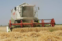 Рекордный урожай позволит России засыпать мир зерном